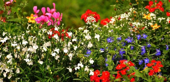 7 manieren om je tuin zomerklaar te maken