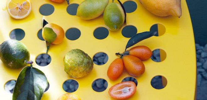 Citrusboompjes, fris en fruitig in de tuin