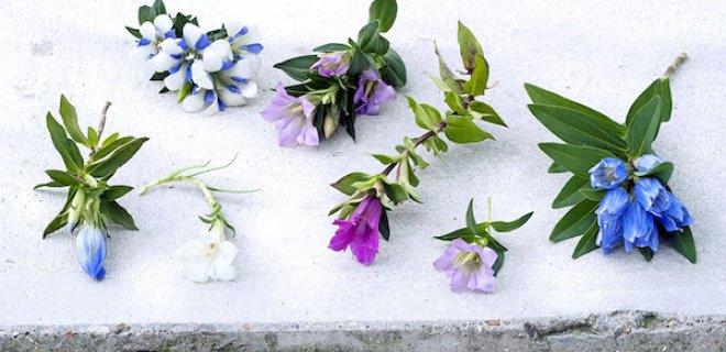 Kleur op je terras: prachtige blauwe klokjes
