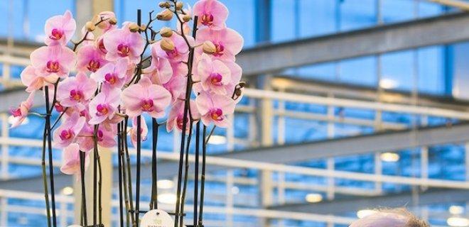Primeur: biologische orchideeën!