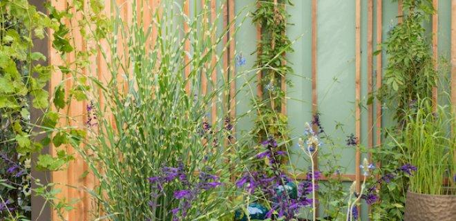 Tuintrends waar ook de bijen van houden