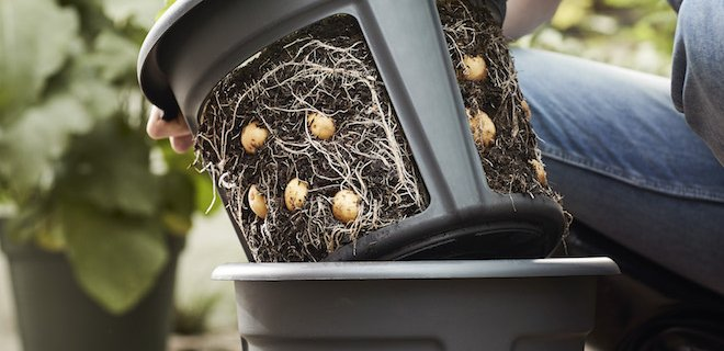 Zo groeien aardappels: de Green Basics Potato Pot