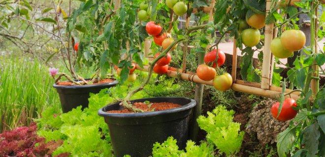 De tuin klaarmaken voor de toekomst