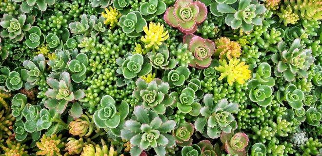 Een groendak op je tuinhuis, schuur of overkapping