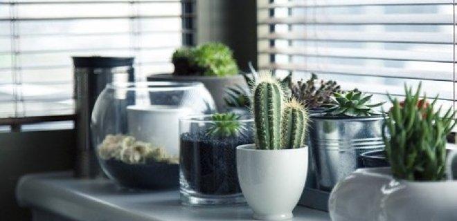 Handige apps voor het verzorgen van jouw planten