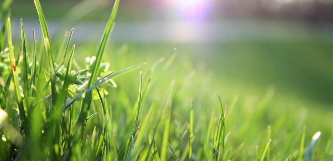 Je gazon opknappen in de lente - 4 praktische tips