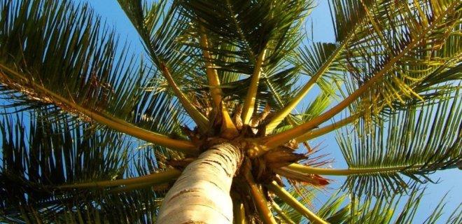 Parketvloeren van kokoshout: exclusief & duurzaam