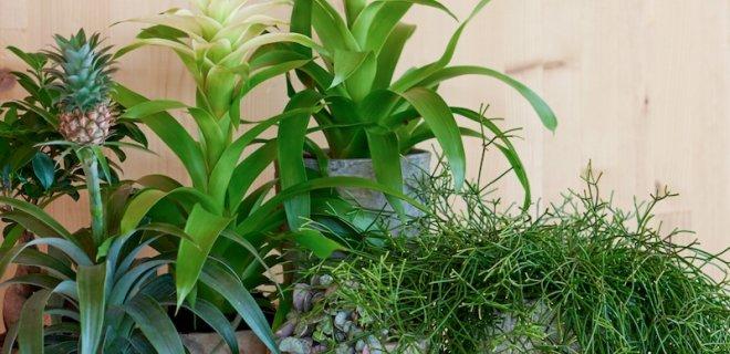 5 redenen om deze plant in huis te halen