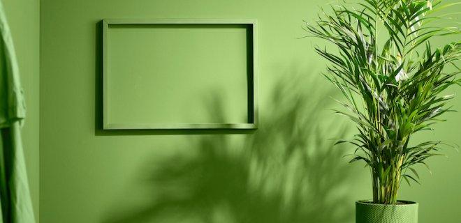5 tips voor de verzorging van groene planten in huis