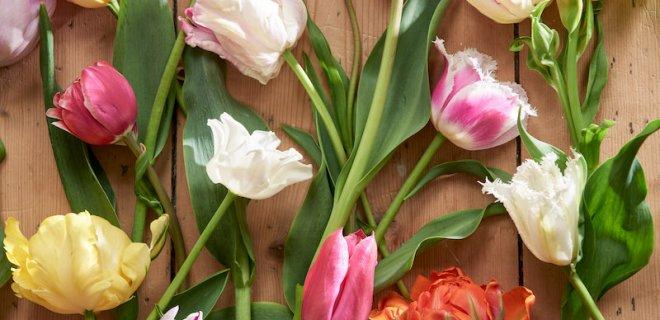 5 x tulpen in huis
