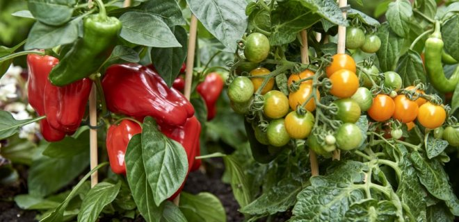 Vertical gardening met groenteplanten