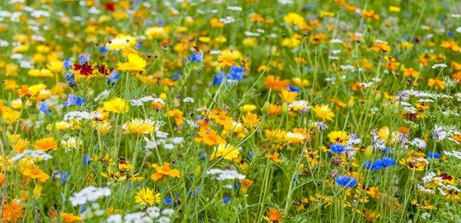 Nu zaaien voor bloemen, bijen en een betere bodem