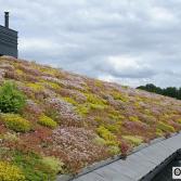 Easygroen hellend dak | Ekogras