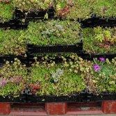 Voorgekweekt groendak systeem | Ekogras
