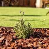 Franse Boomschors: haal een natuurlijke sfeer in je tuin!