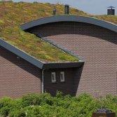 Groen dak met dakbegroeiing