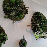 Moswens Jungle cirkels