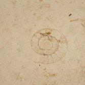 Kalksteen vloeren van Jura