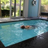 Zwemtrainer in binnenbad | Swimm