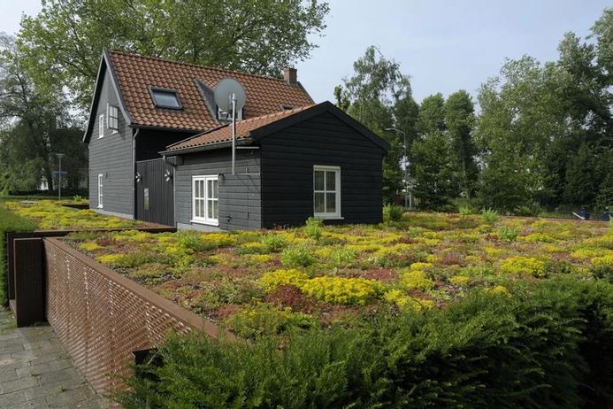Groene daken | Ekogras