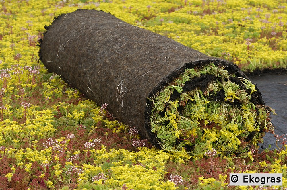Ekogras groendak sedumroll vetplantenmat