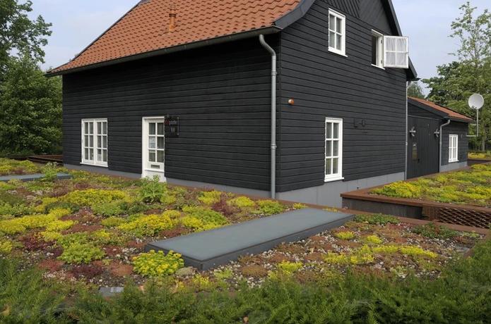 Simplexgroen licht voor het dak | Ekogras