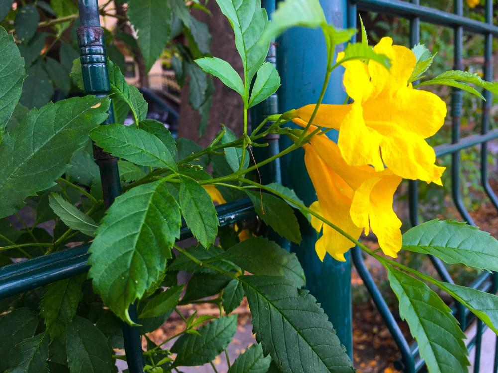 Nieuwe schutting in de tuin laten zetten? Bekijk eerst eens de mogelijkheden van hekwerk #tuin #schutting #hekwerk