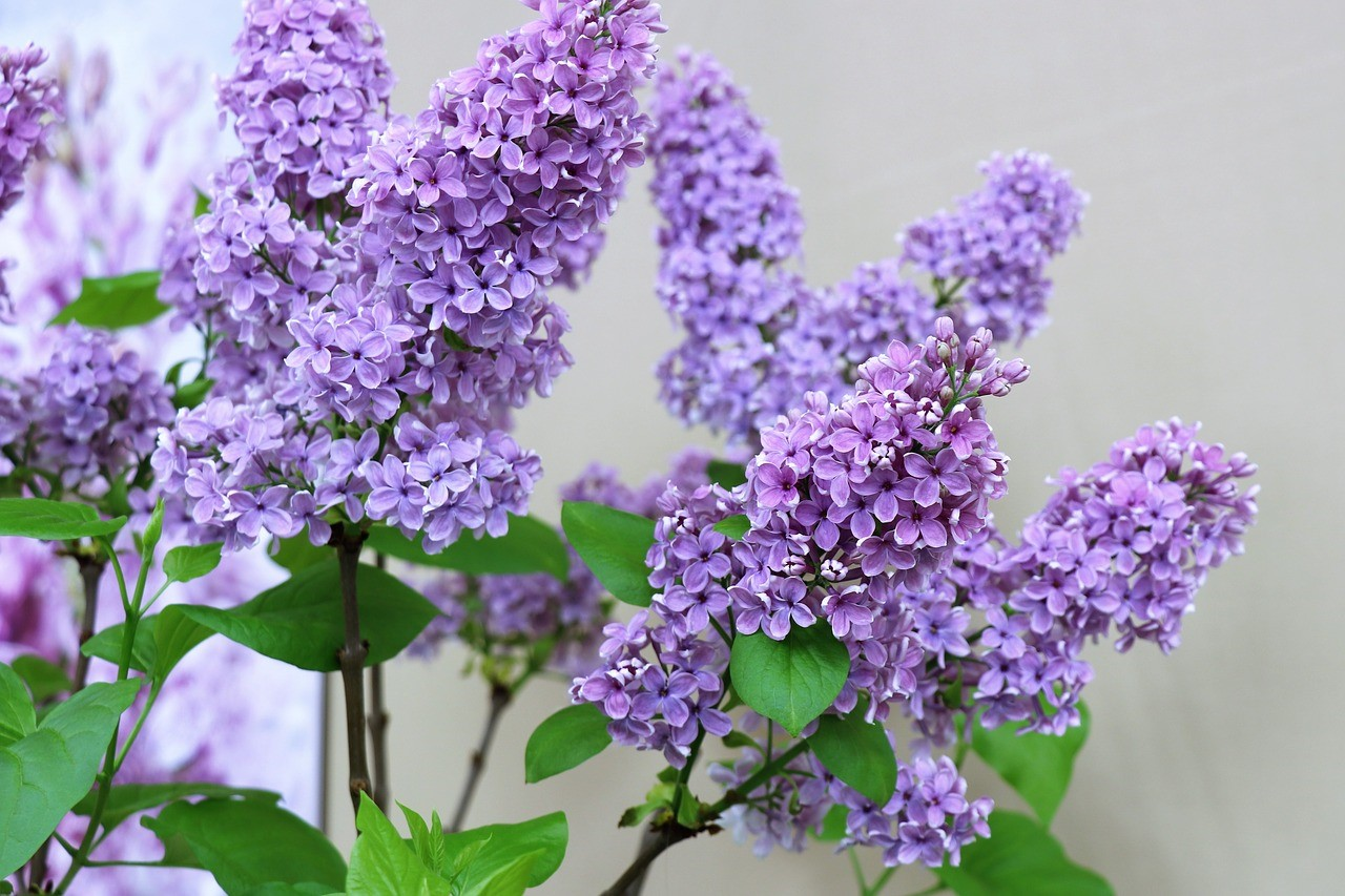 Zo zorg je voor meer levendigheid in je tuin #tuin #inspiratie #tuinieren