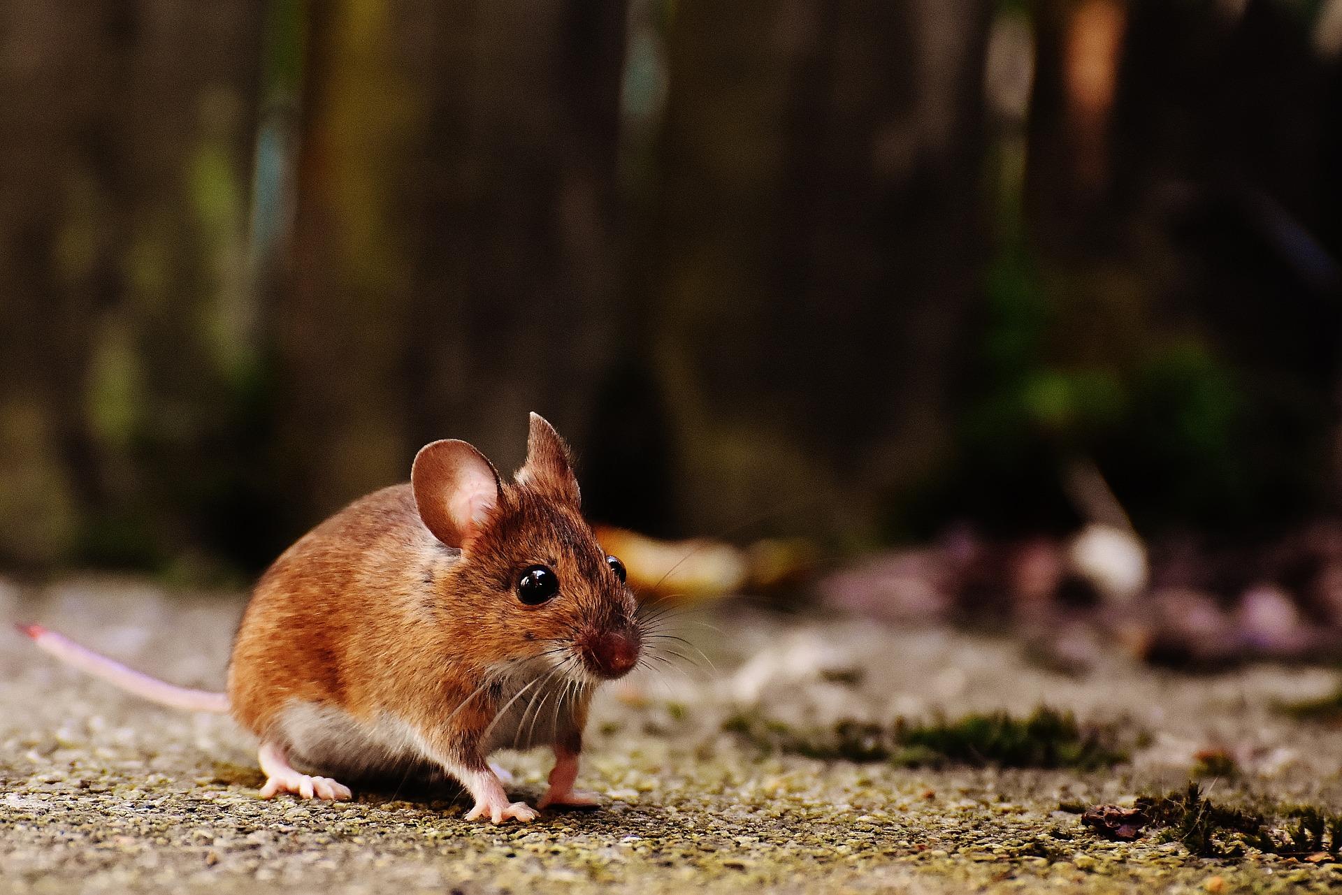 Muizenplaag in huis #muizen #muizenplaag