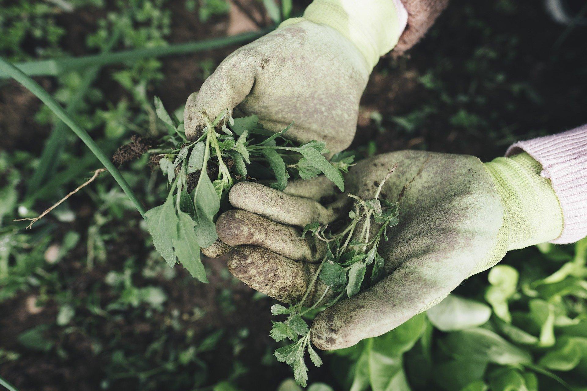 Eenvoudige manieren om onkruid te verwijderen #tuin