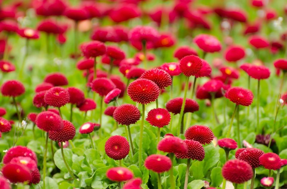 Voor welke tuin kies jij! #tuin #tuininspiratie