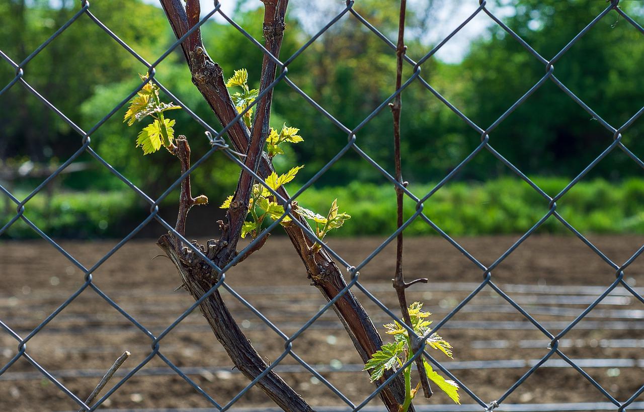 De voordelen van een glaspaneel in je tuin als tuinafscheiding #gaaspaneel #tuinafscheiding #tuin