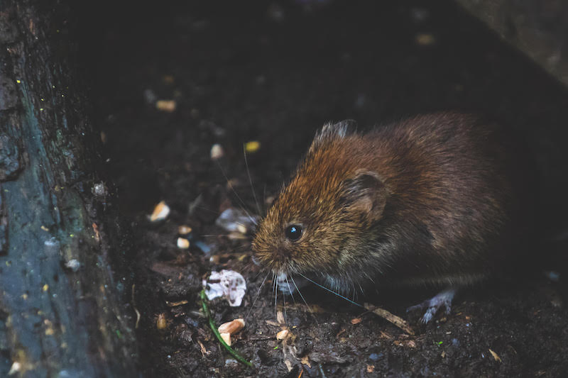 Jouw ongedierteplaag laten verhelpen #ongedierte #muizen #ratten #bestrijding #ongediertebestrijding