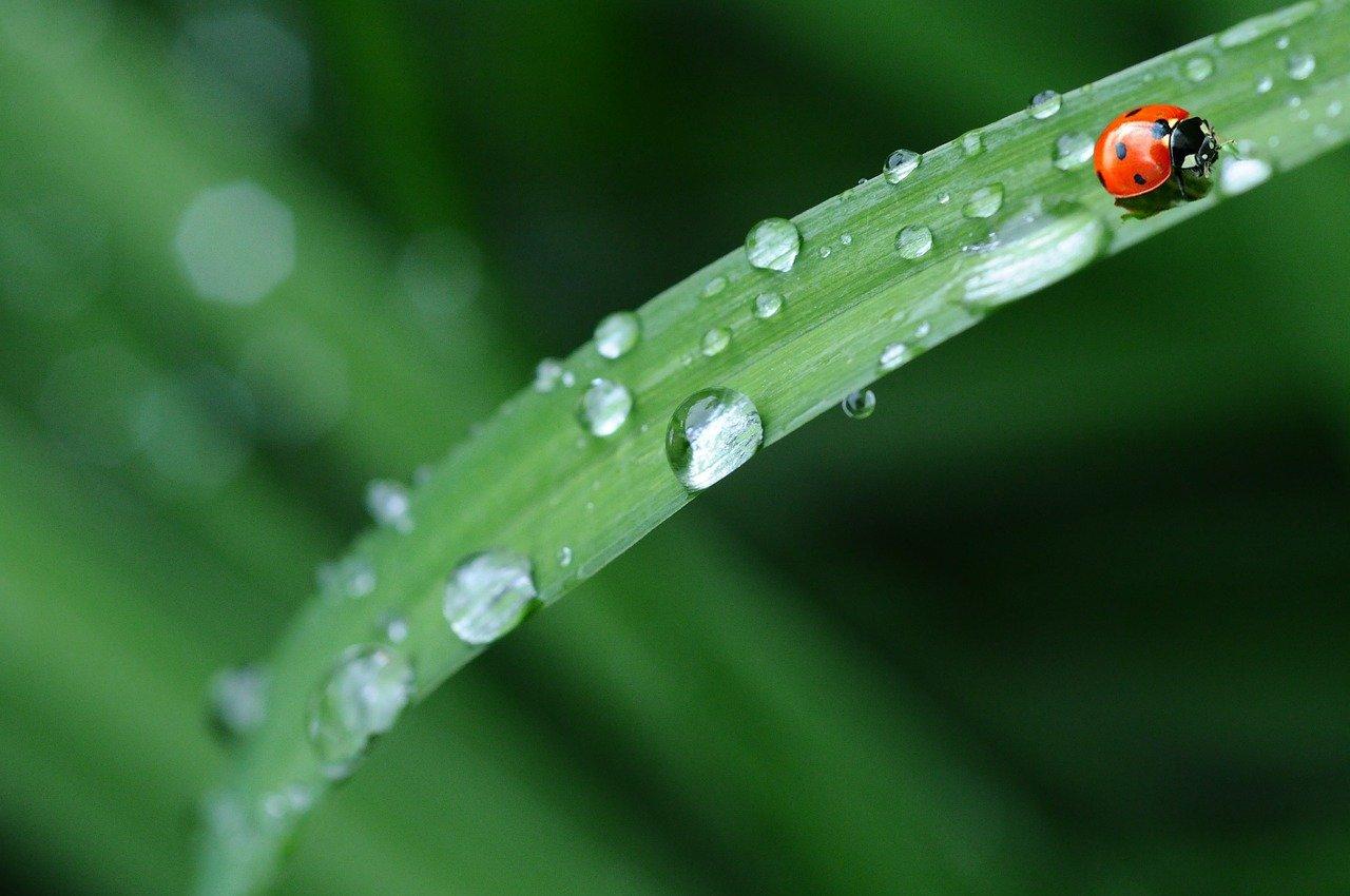 Heb jij last van bladinsecten in de tuin? Tips om ze te bestrijden #tuin #planten #bladluis