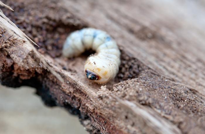 Haardhout in huis voor de houtkachel. Houtworm bestrijden #houtworm #haardhout