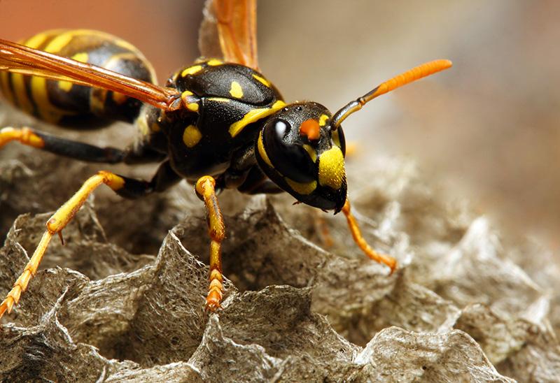 Hoe kan je een wespennest herkennen #wesp #tuin