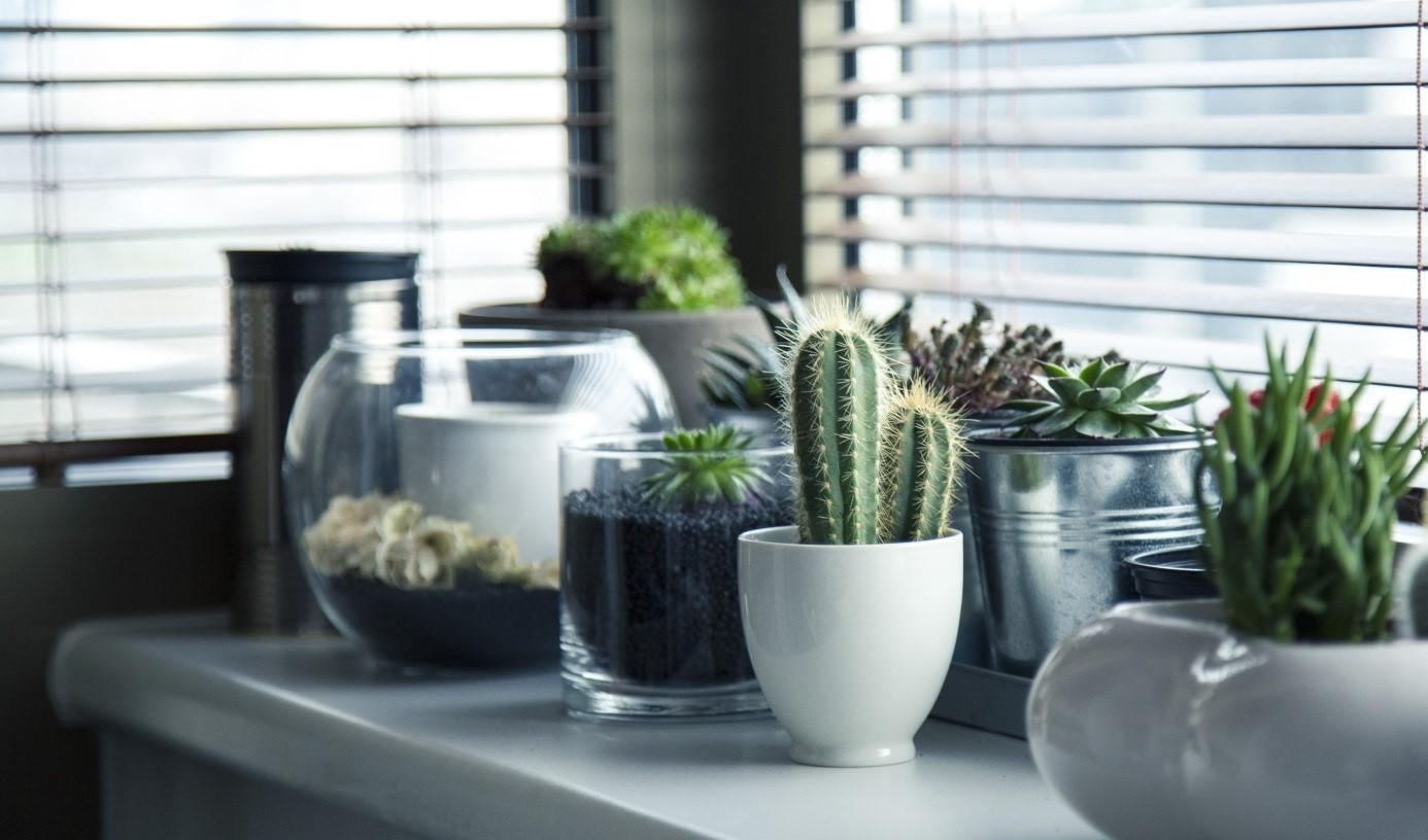 Raamdecoratie tuindeuren met accessoires en groene planten #trends #tuindeuren #interieur #raamdecoratie