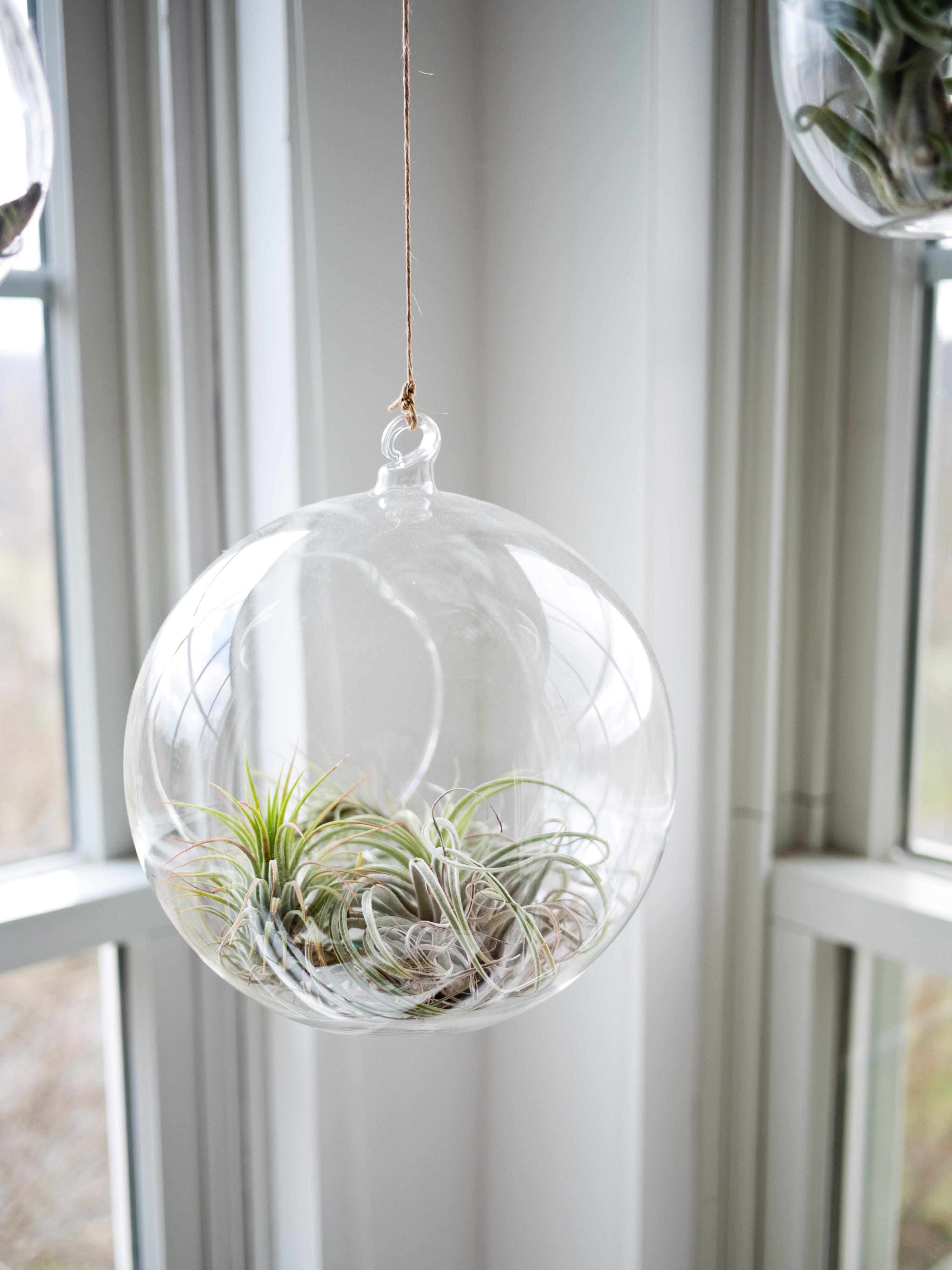UW-woonmagazine blog Tips om een kleine kamer te stylen planten door Styling ID