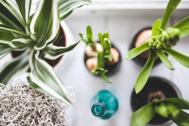 UW-woonmagazine blog Maak je huis lente proof planten
