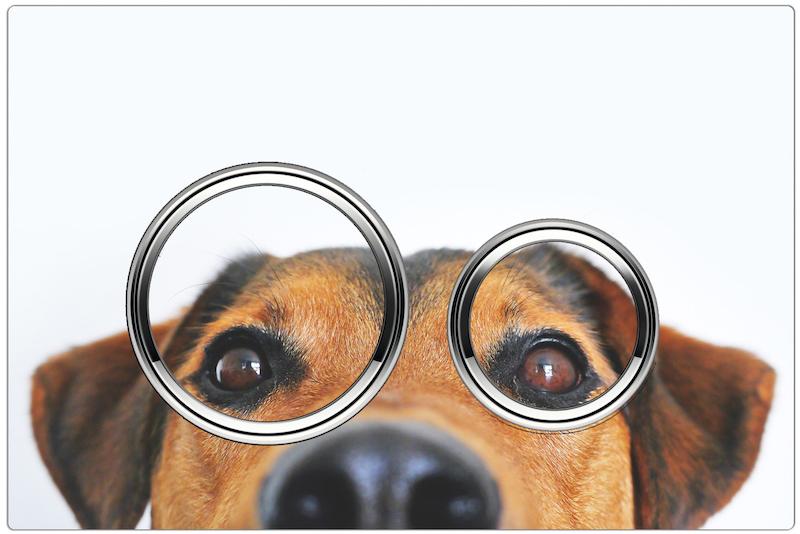 Geberit bedieningsplaat Sigma met afbeelding van hond. Ontwerp zelf je bedieningsplaat op de website maakjeeigenbedieningsplaat.nl #geberit #bedieningsplaat #sigma #toilet