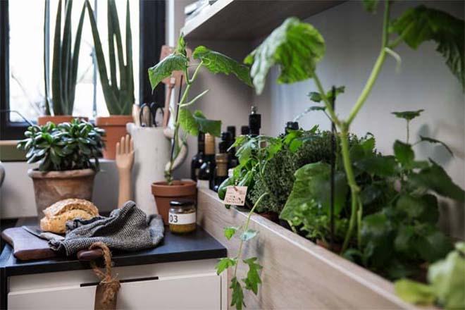 SieMatic Urban keuken met kruidenrekken en planten. #siematic #keuken #keukeninspiratie #planten #kruiden