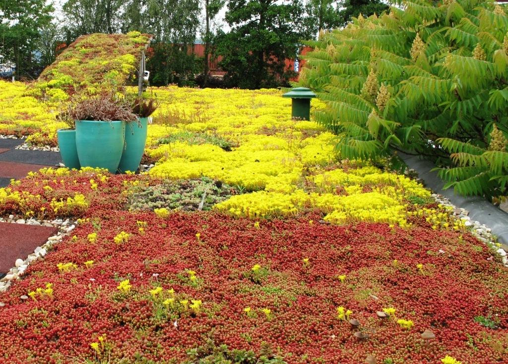 Groen dak met sedum #groendak #sedumdak #tuin