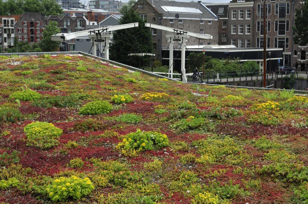 Groendak-sedumdak van Ekogras - duurzaam wonen