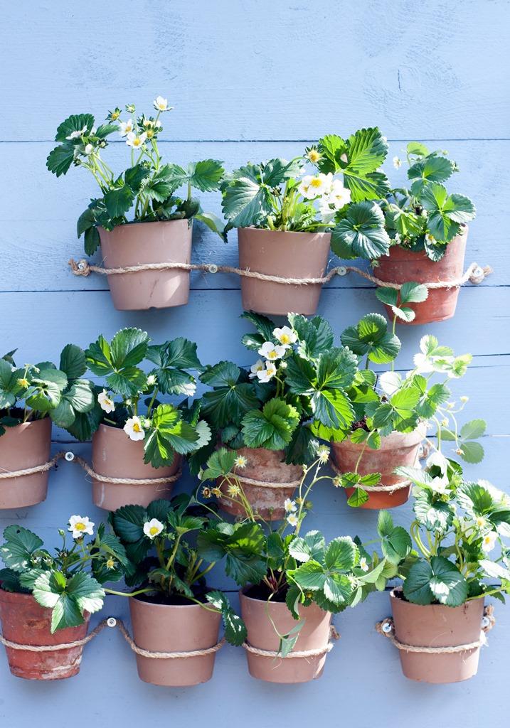 Verticaal tuinieren op terras, balkon of in de tuin