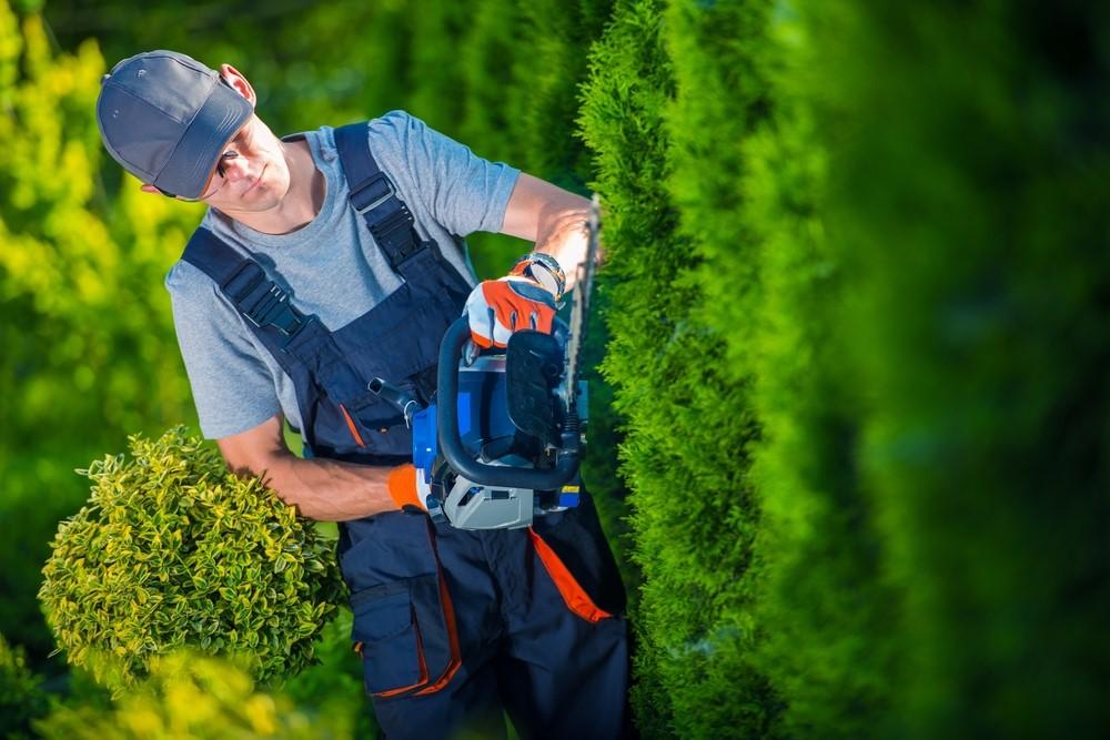 Tuinieren als een pro: deze items moet je hebben #tuin #tuingereedschap #tuinieren #tuinonderhoud
