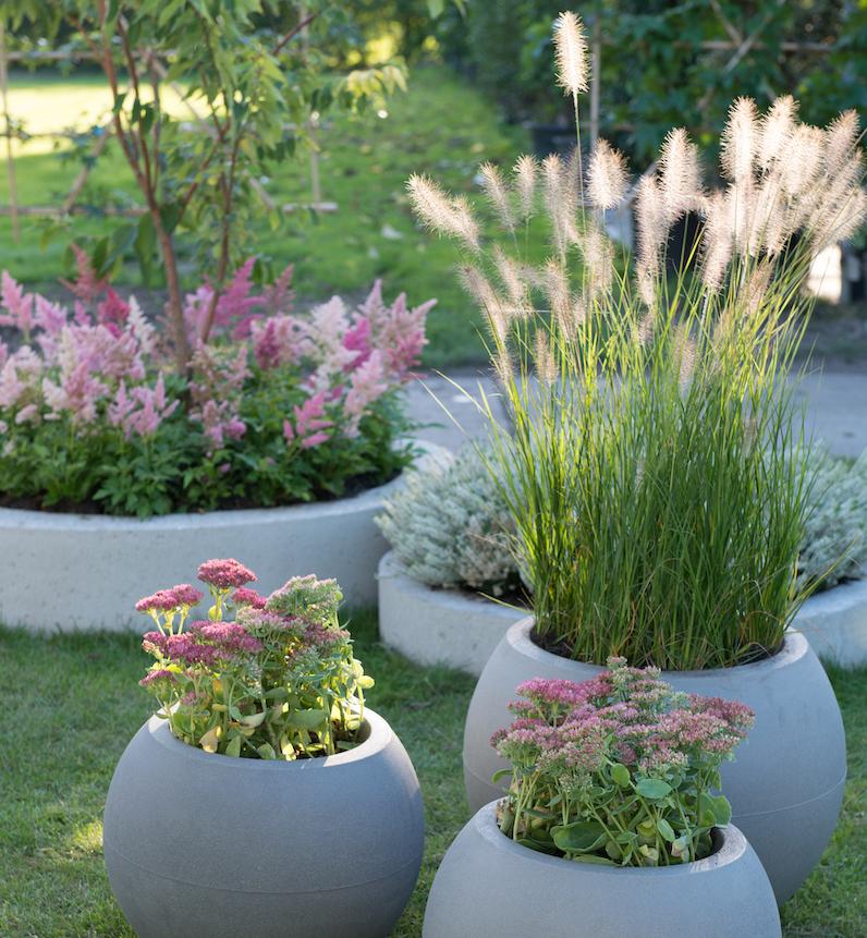 Tuintrends 2019. Veel groen met zilveren en paarse elementen #tuin #tuintrends