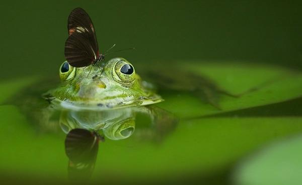 Groene kikker in de tuin #tuin #groenetuin #vijver