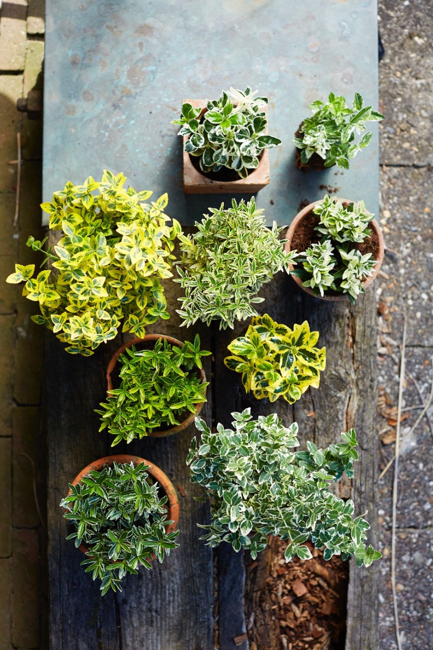sterke planten voor je balkon en terras #balkon #planten