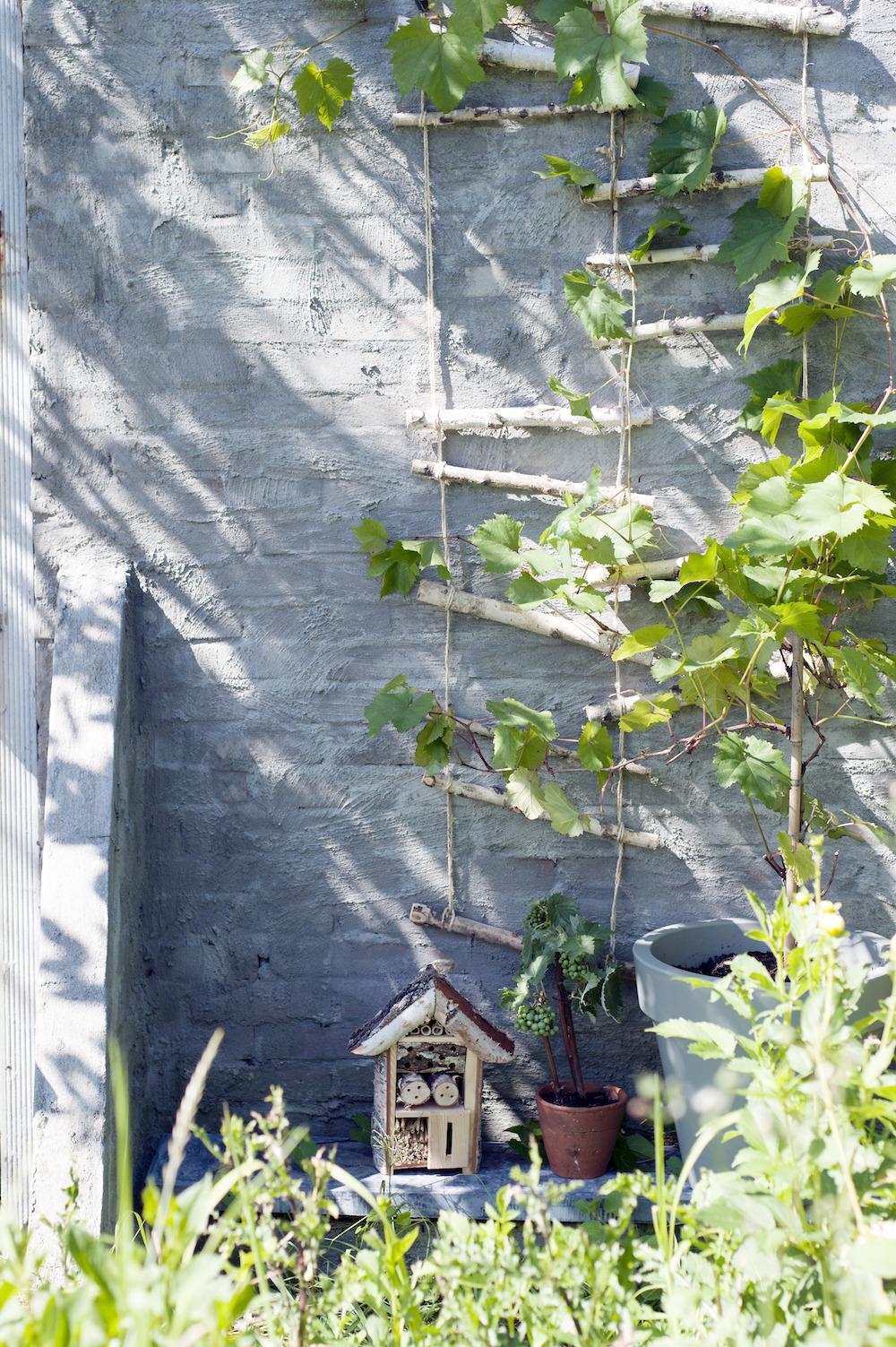 Klimmers op het balkon of het terras. Planten. Mooiwatplantendoen #balkon #terras