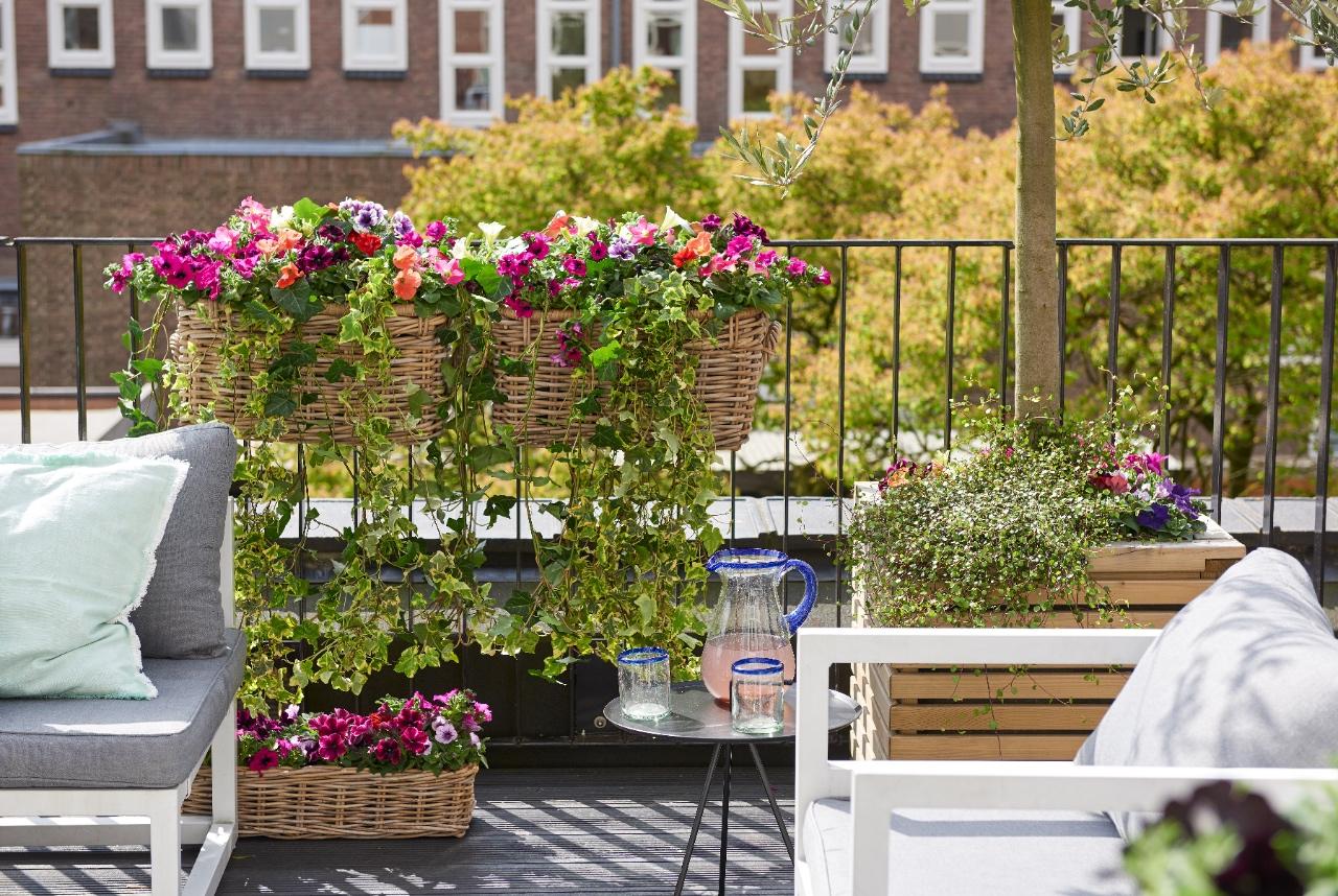 Planten voor je balkon of dakterras #balkon #terras